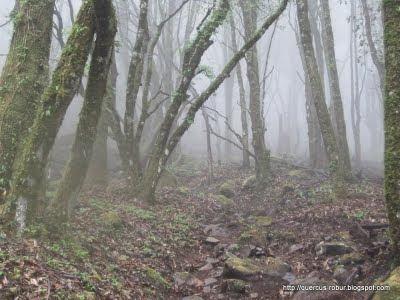 11 - Ascendiendo los últimos kilómetros en Cerro Viejo con neblina