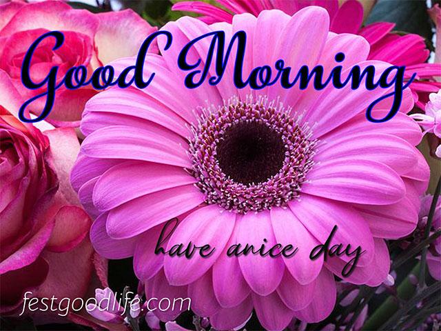 good morning rose images  flower good morning images download