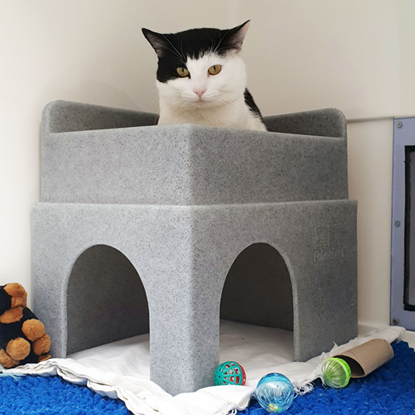 black-and-white cat sitting on top of bed in Cats Protection pen