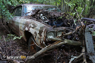 This Chevelle has been in the woods for more than 20 years.