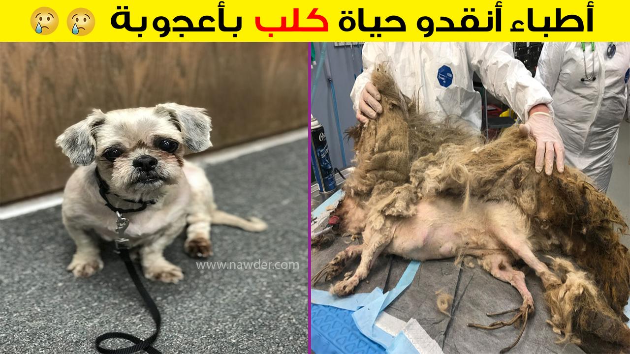 أطباء أنقدو حياة كلب بأعجوبة 😢😢