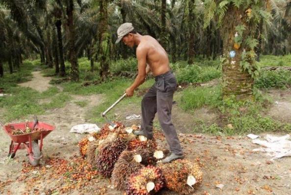 Perusahaan Sukanto Tanoto Gandeng Petani Swadaya untuk Sejahtera Bersama dan Berdampak Bagi Lingkungan Sekitar
