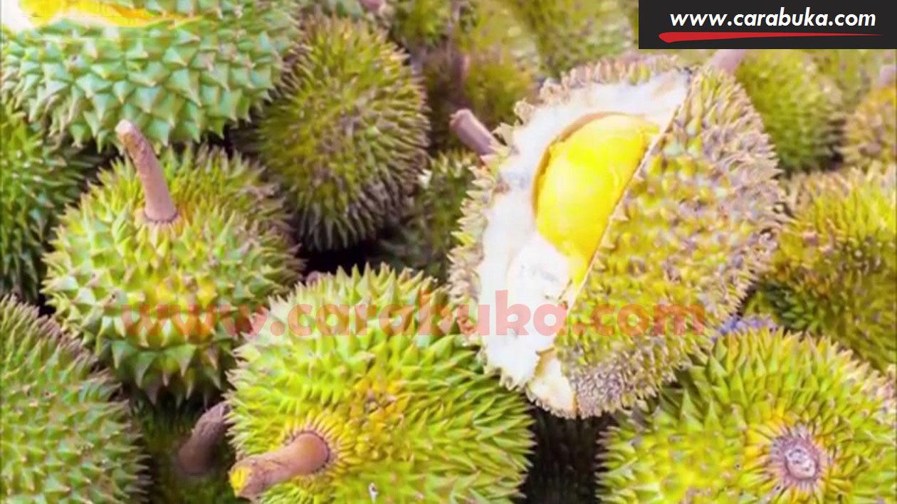 Tips Cara Memilih Durian Matang dan Manis 13
