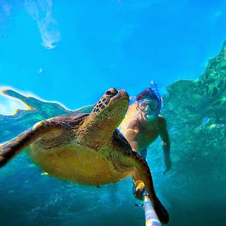Christian Leblanc swimming with a huge tortoise and taking an underwater selfie with them during his tour to Asia via geniushowto.blogspot.com the elephant clicked a selfie