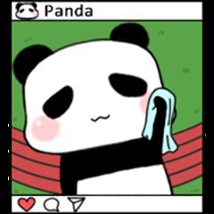 Panda-exercise