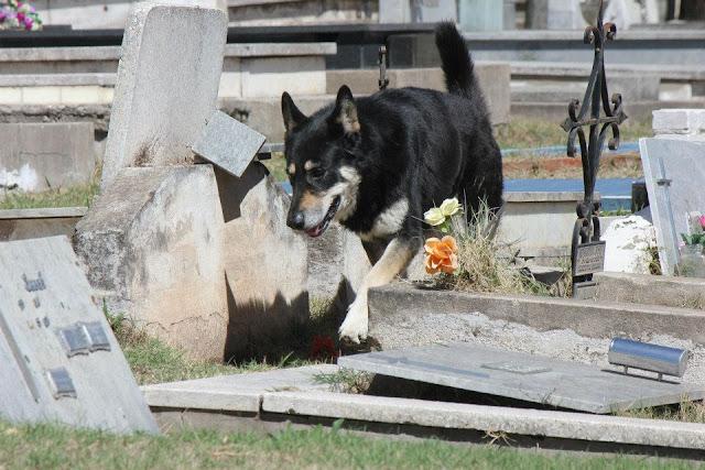 Ушел из жизни пёс, проживший 11 лет на могиле хозяина! Светлая память верному другу!
