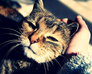 kucing jinak