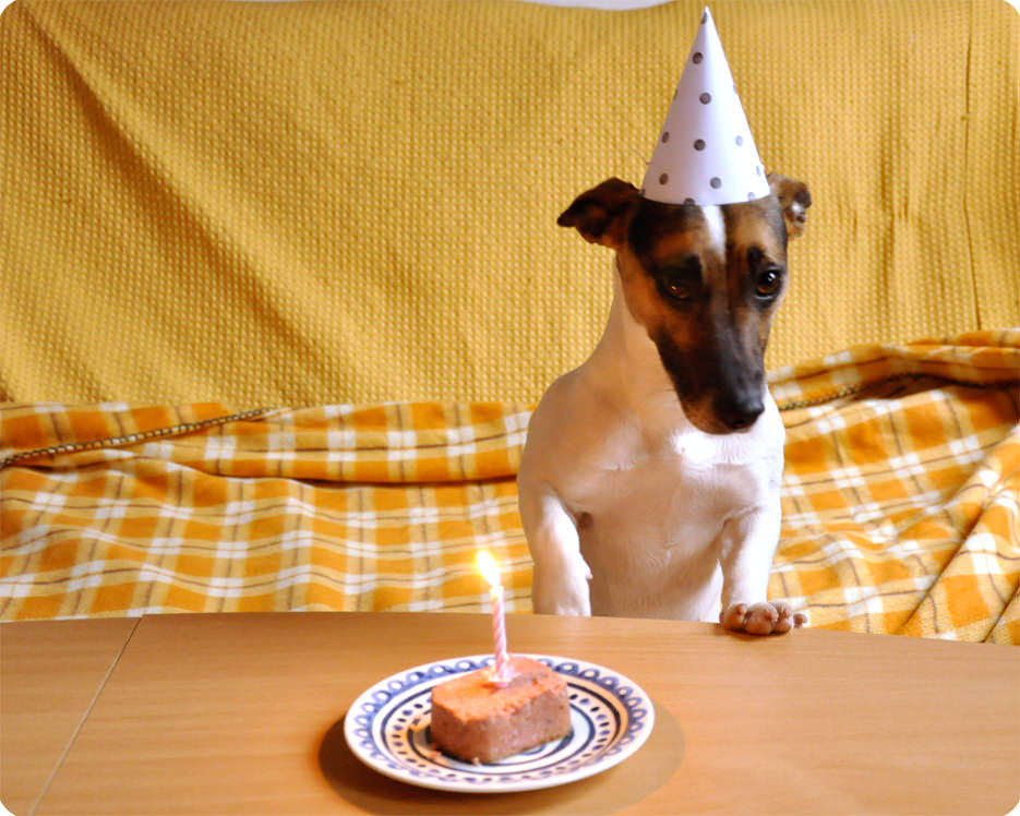 Happy Birthday Fifi Dog Party Hat Template Today Turns 1 Year Old