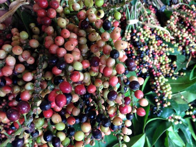 khasiat buah buni yang mengandung khasiat dan manfaat bagi kesehatan yang ada di bandar Lampung