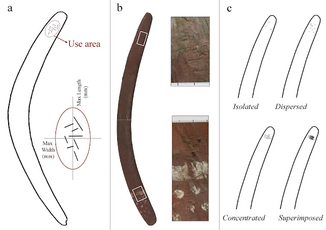 Boomerangs return with greater insights into ample uses