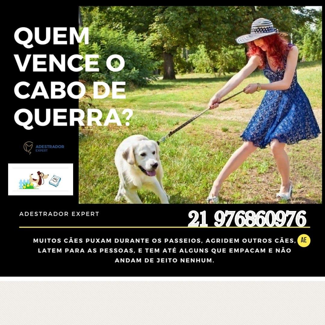 46d188796 Adestramento de cães