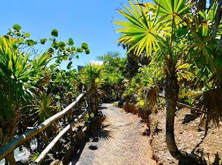 #payabay, #payabayresort, zen path, views, nature, beauty, bliss beach, paya bay resort, nature trails, black iguana beach bar,