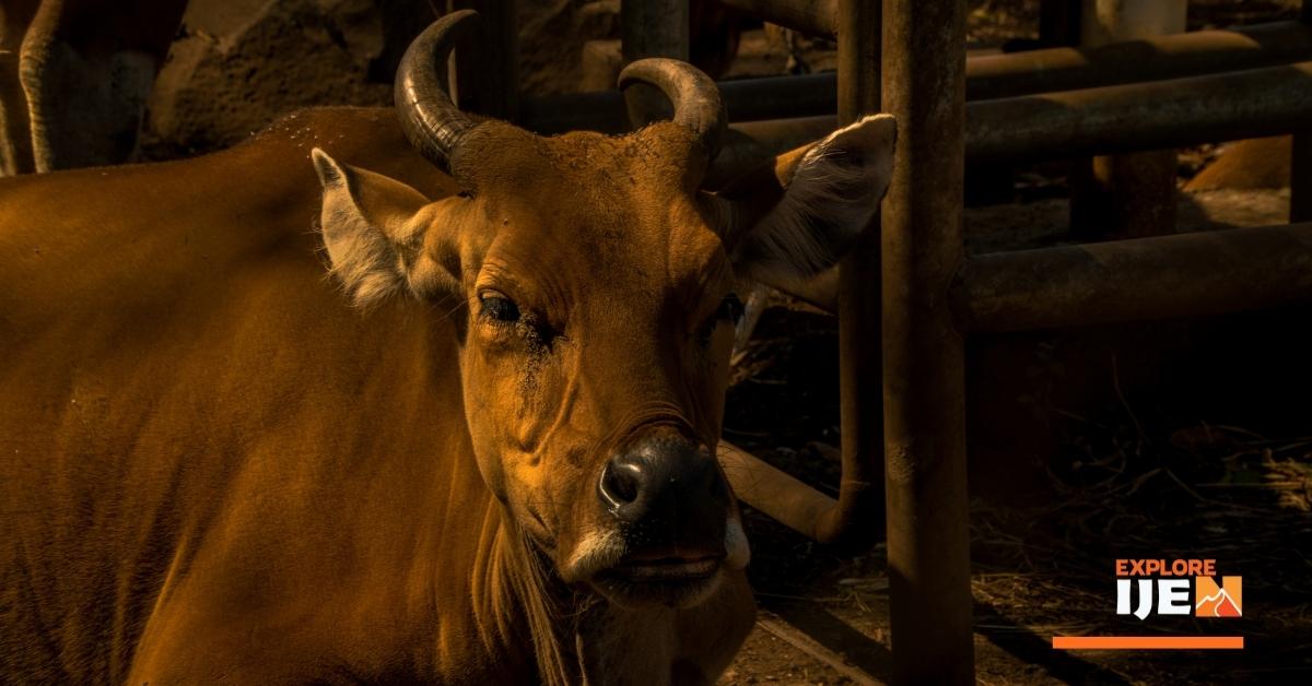 baluran, kandang banteng jawa di Banyuwangi
