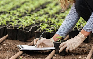 A person crouched down and writing on a white pad next rows of green plants in black containers.