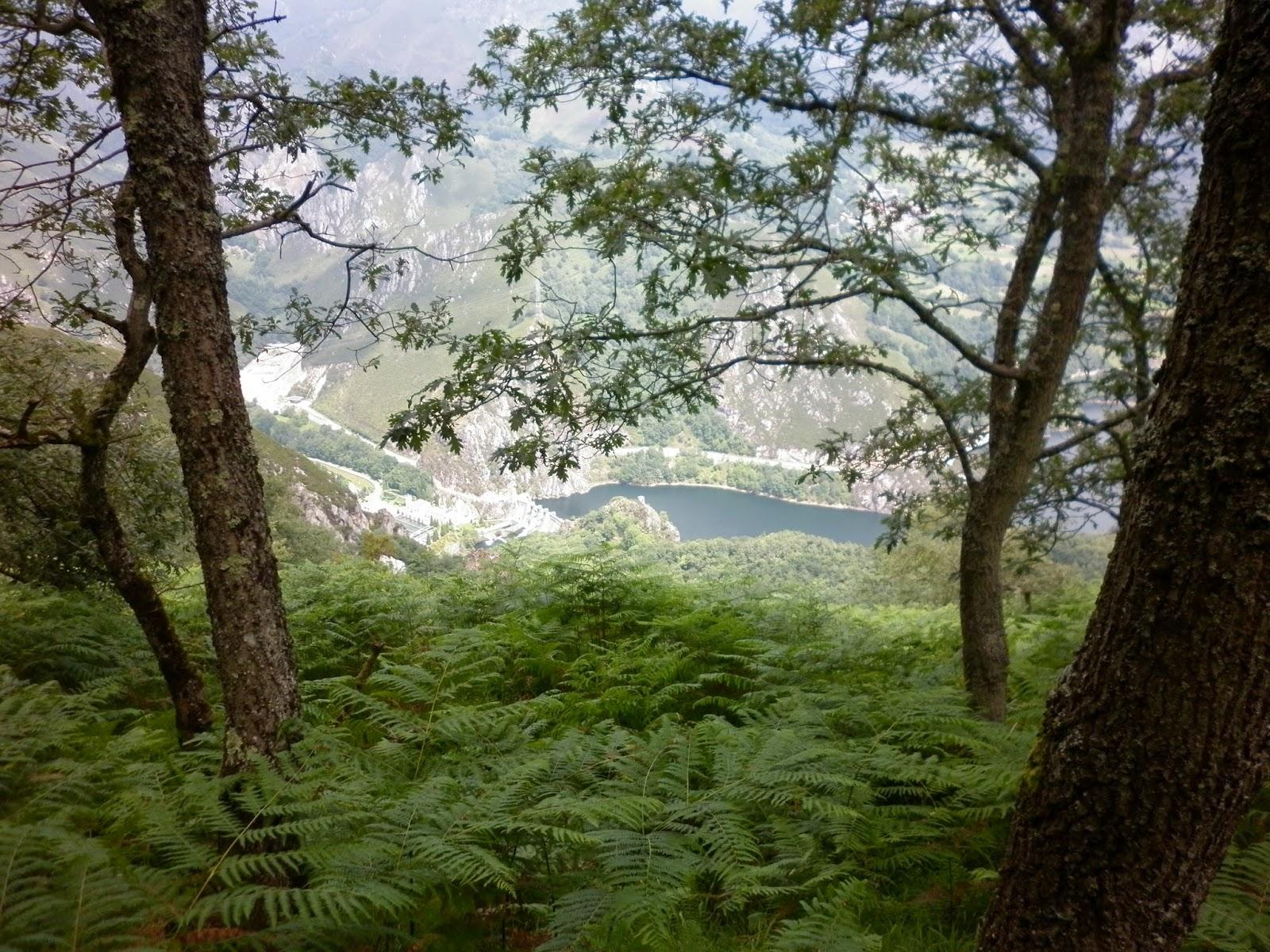 Vegetación abundante en la Sierra del Crespón