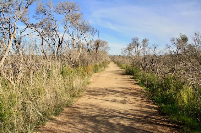 Warringine Wetlands, Hastings wide dirt track