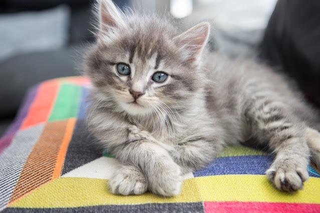 chaton-3-mois