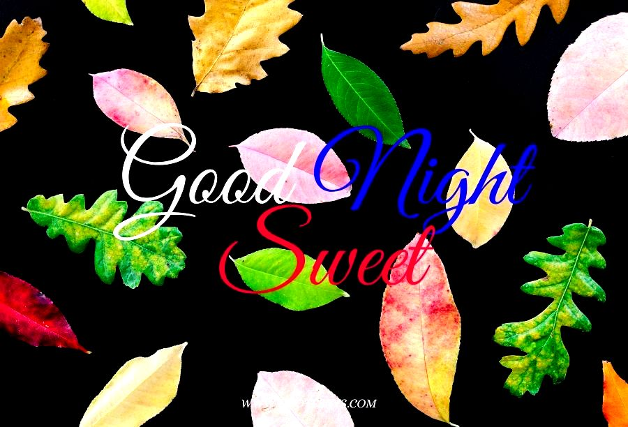 Good Night Colorful Leaves