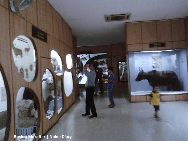 Noida Diary: Museum Gallery at The National Museum of natural History, New Delhi
