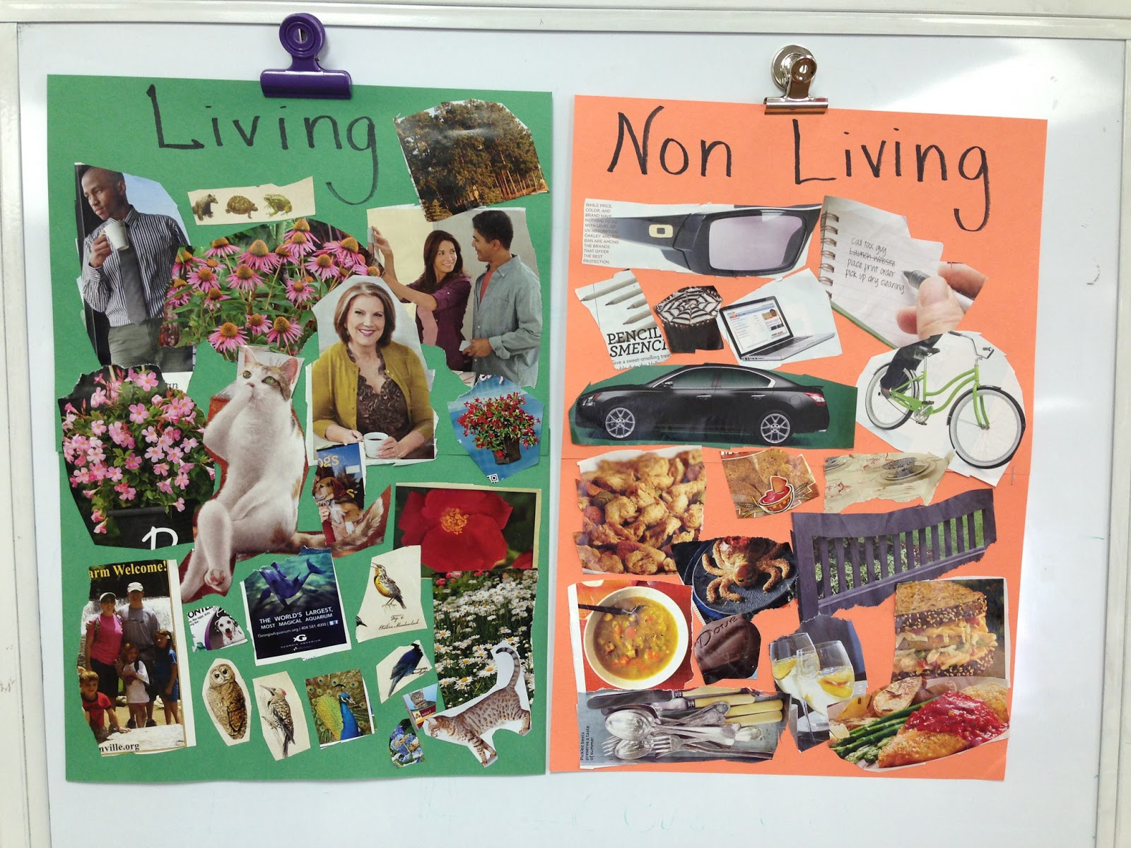 Kindergarten Hopefuls All About Living Things