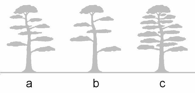 bonsai skosh  on the origin of bonsai appeal to man