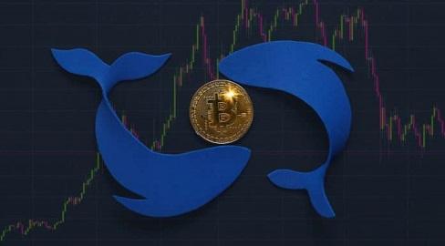Baleias aproveitam queda e continuam acumulando bitcoin