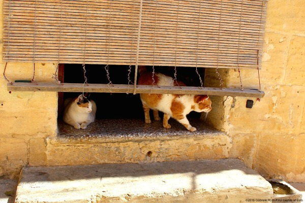 Għajnsielem Gozo stray cat carers