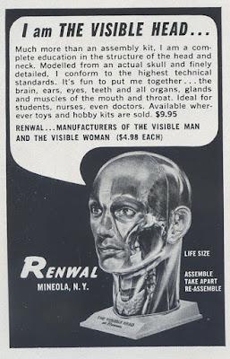 Renwal Visible Head