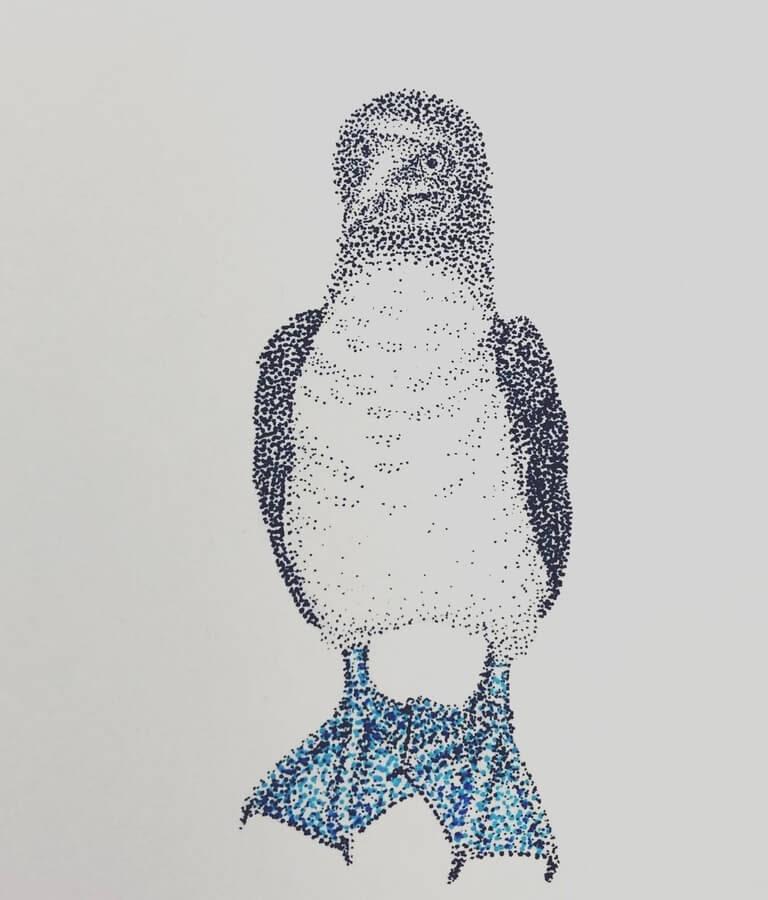 11-Blue-footed-boobie-Maria-Lecanda-www-designstack-co