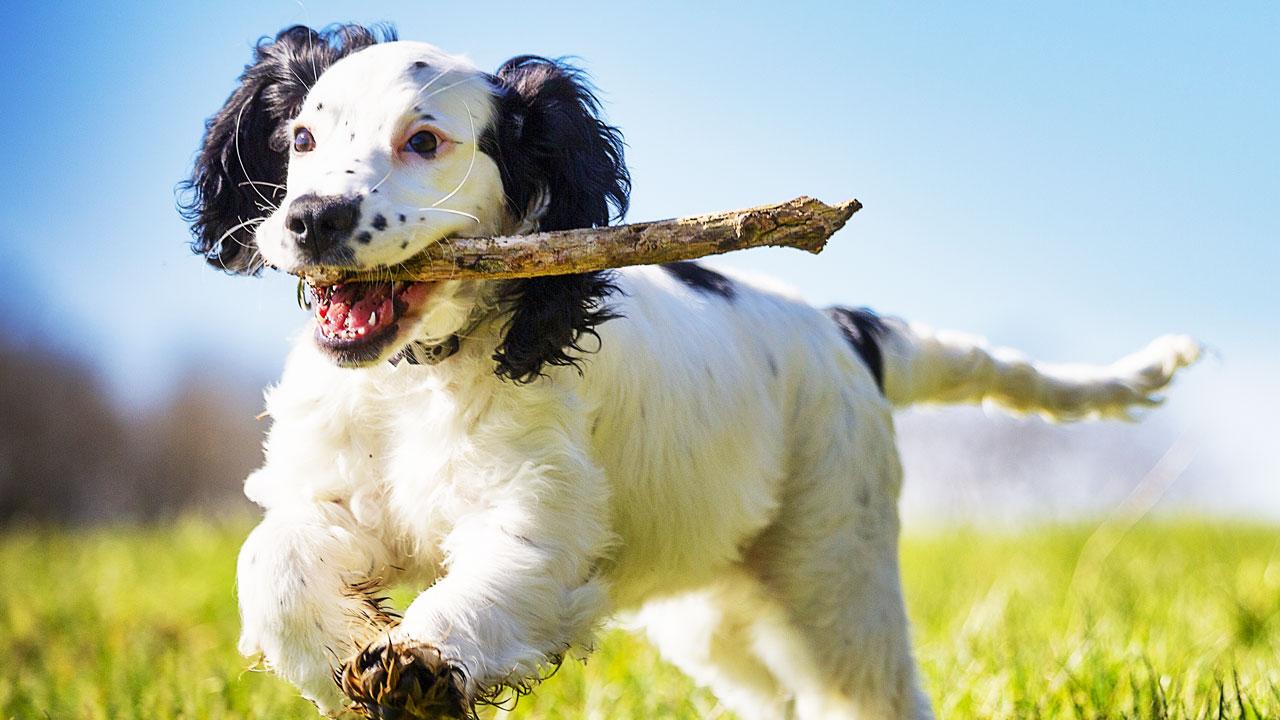 26 façons simples et rapides de soulager l'ennui des chiens