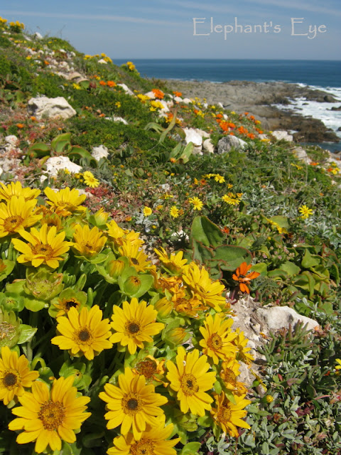 Didelta at Plankiesbaai 2014