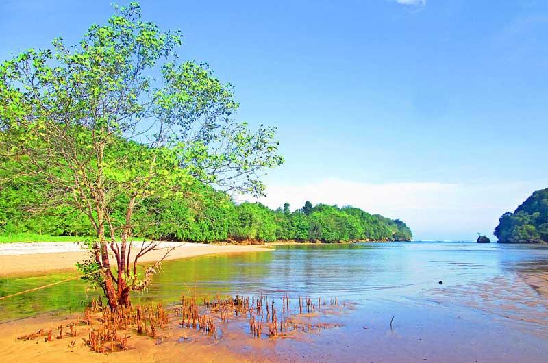 Rute Lokasi Clungup Mangrove Conservation