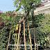 Jasa Pembuatan Vertical Garden dan Harga Pasang Terbaru di Cilacap