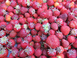 lots of little strawberries