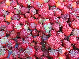 lots of little strawberries