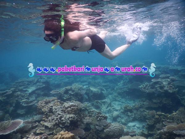 paket snorkeling di karimunjawa 4h3m