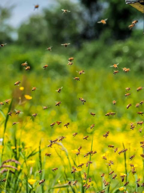 Vliegende Honingbijen