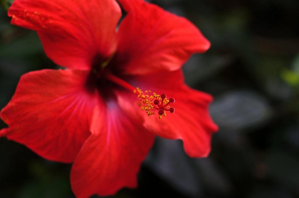 #062 Trioplan f2.8 50mm – Blütenstempel