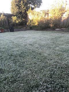 Truskot, frost, roses, winter, dormancy