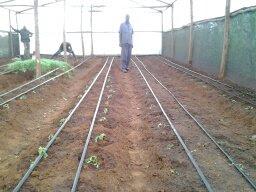 greenhouse kenyadrip irrigation