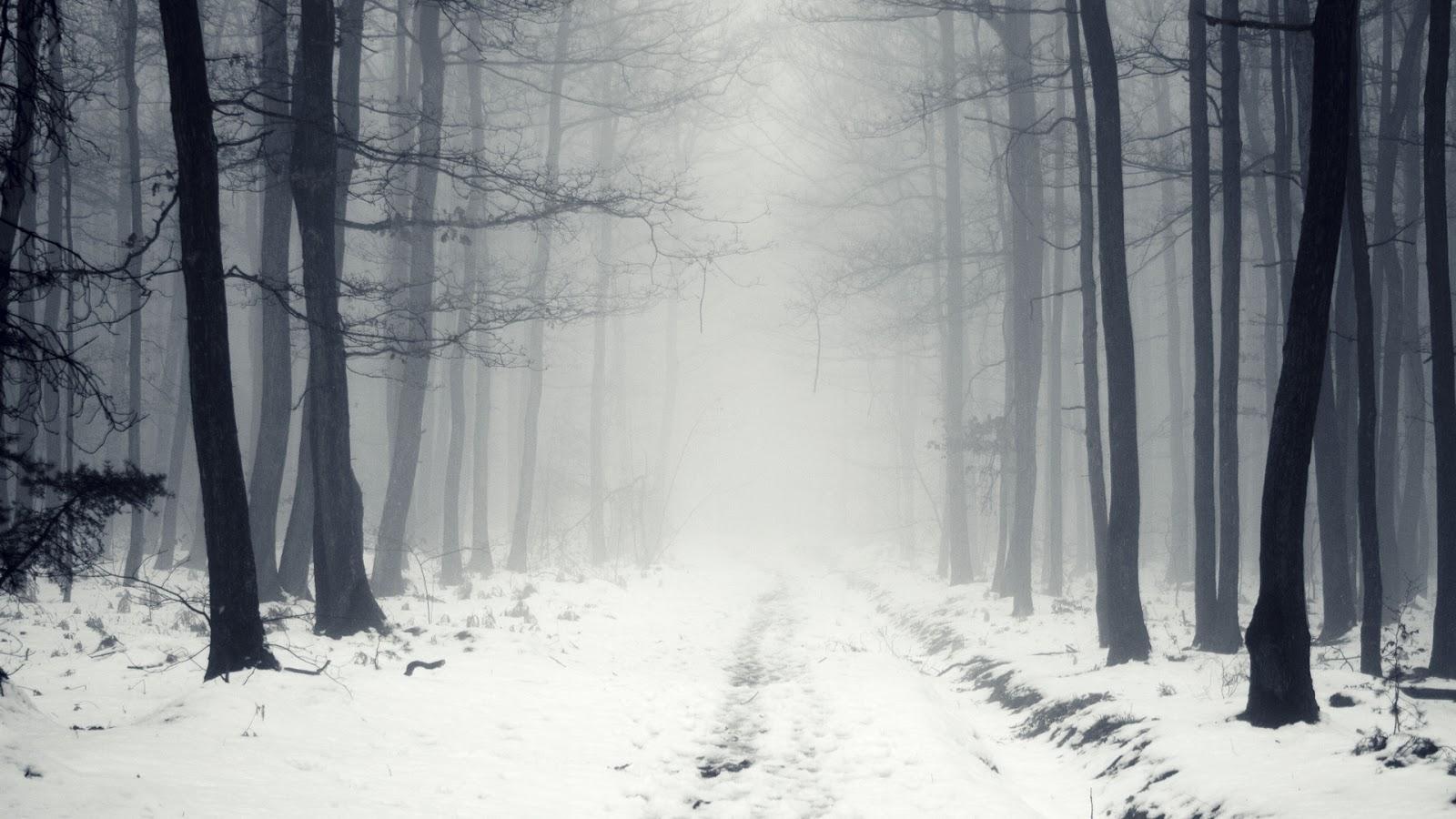 Fondo De Pantalla Paisajes Camino Nevado