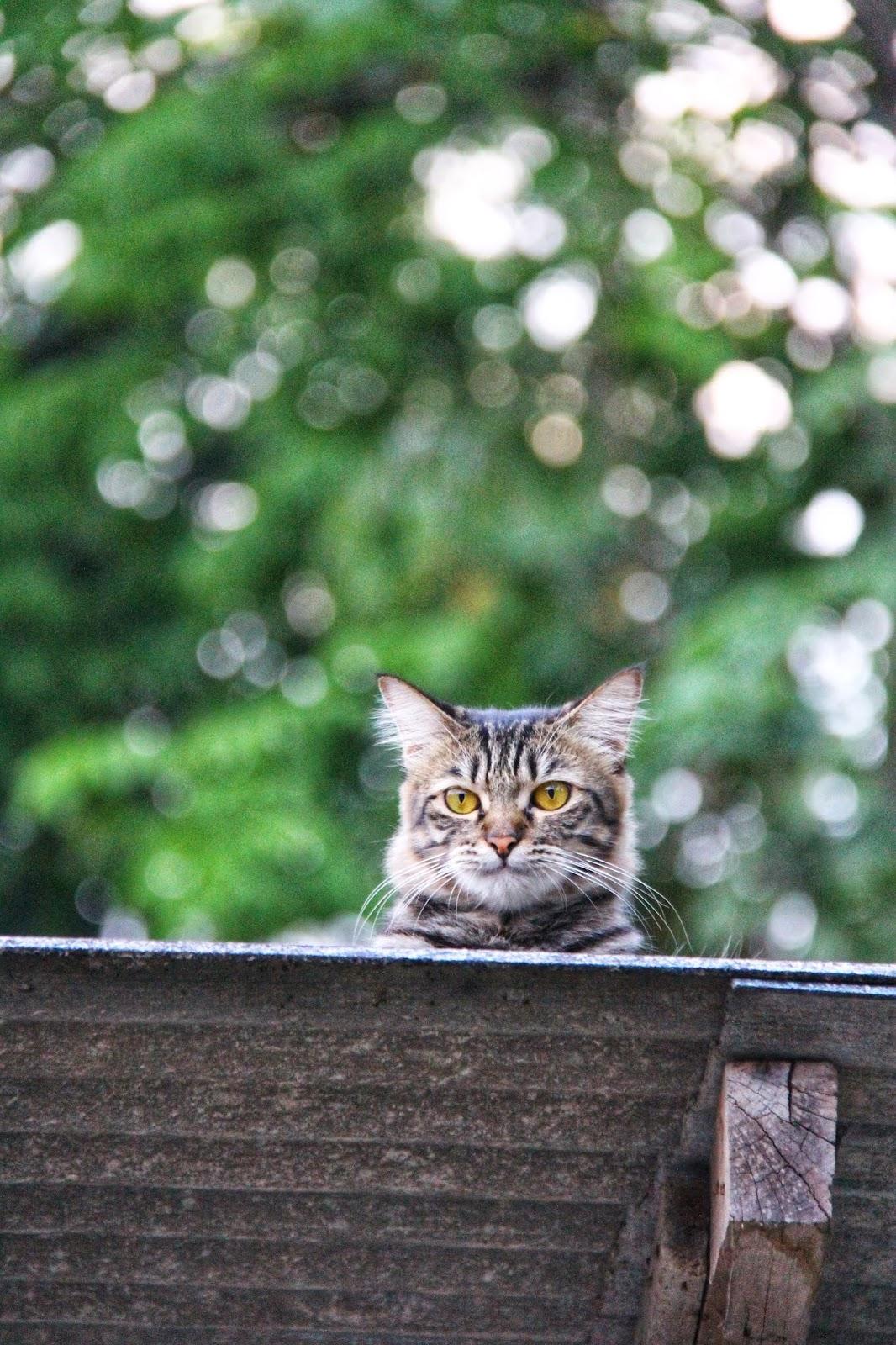 20 Koleksi Gambar Kucing Comel Bernama Tambi 6