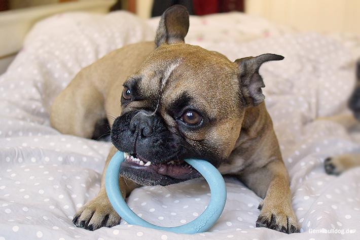 BecoHoop - Ökologisches Hundespielzeug im Test
