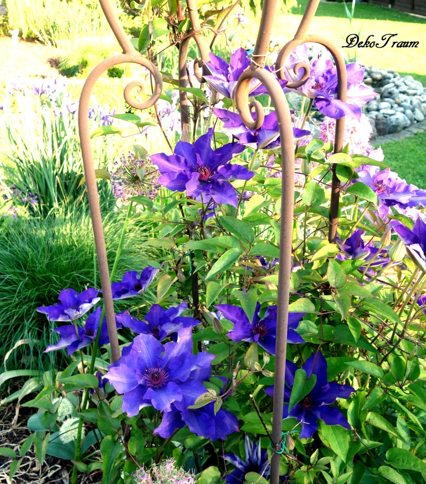 Lila Blumen Im Mai lila blumen lisianthus eustoma rosita
