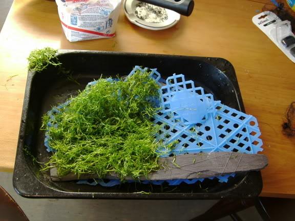Hướng dẫn trải nền bằng rêu Ricca thủy sinh - trải Ricca lên giá thể