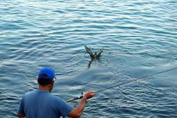 17 Arti Mimpi Menagkap Ikan Di Laut Menurut Primbon Jawa Terlengkap