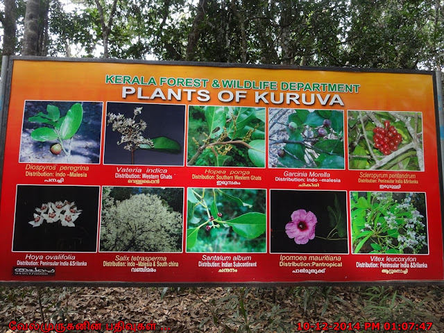 Kuruva Island uncommon species list