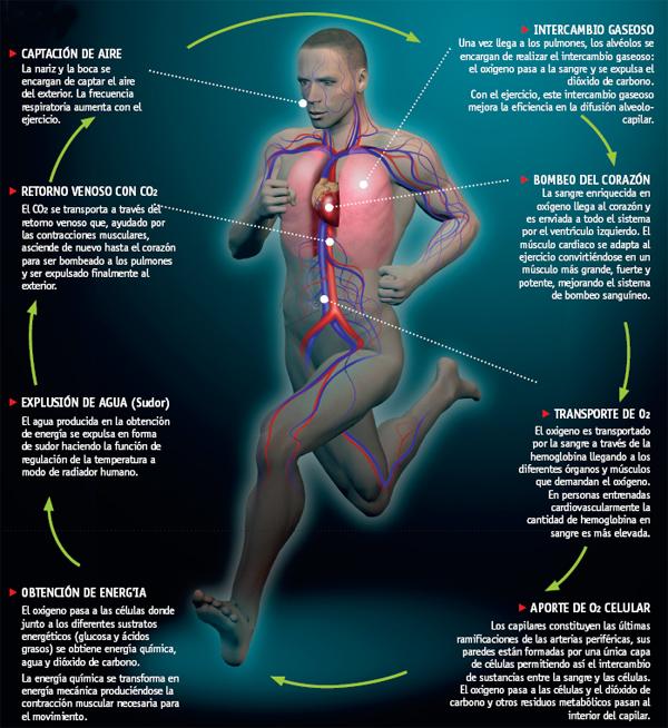 Sonrisa Y El Sistema Cardiovascular