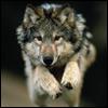 Hayvan Avatarları - Hayvan Resimleri