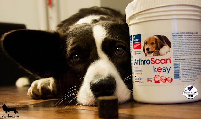 stawy, choroby stawów, psy, welsh corgi, welsh corgi cardigan, suplementy dla psów, suplementacja psów, suplementacja stawów, dysplazja, suplementy